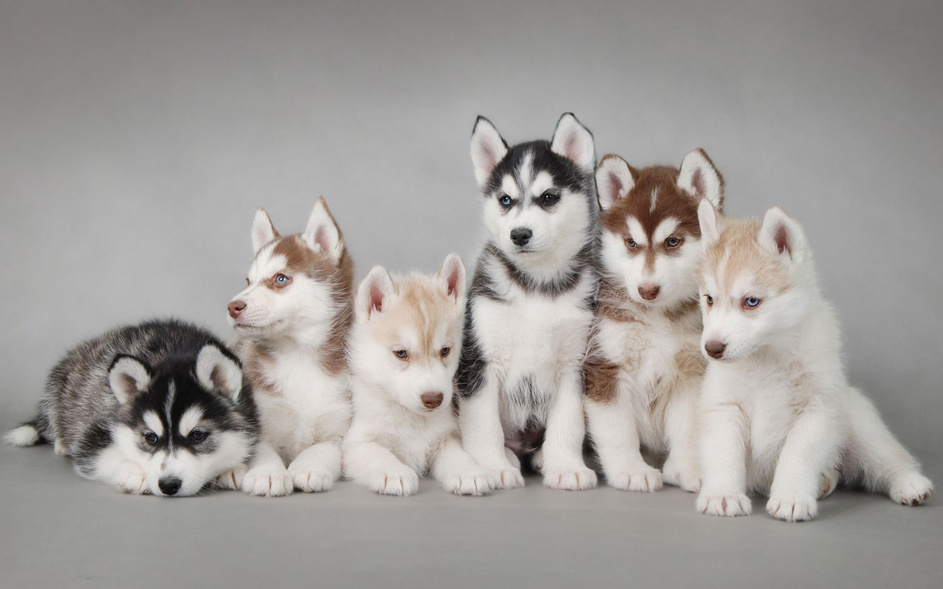 18411 download wallpaper Animals, Dogs screensavers and pictures for free