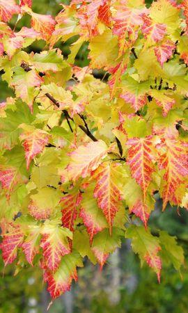 27358 скачать обои Растения, Деревья, Осень, Листья - заставки и картинки бесплатно