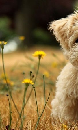 39307 baixar papel de parede Animais, Cães - protetores de tela e imagens gratuitamente