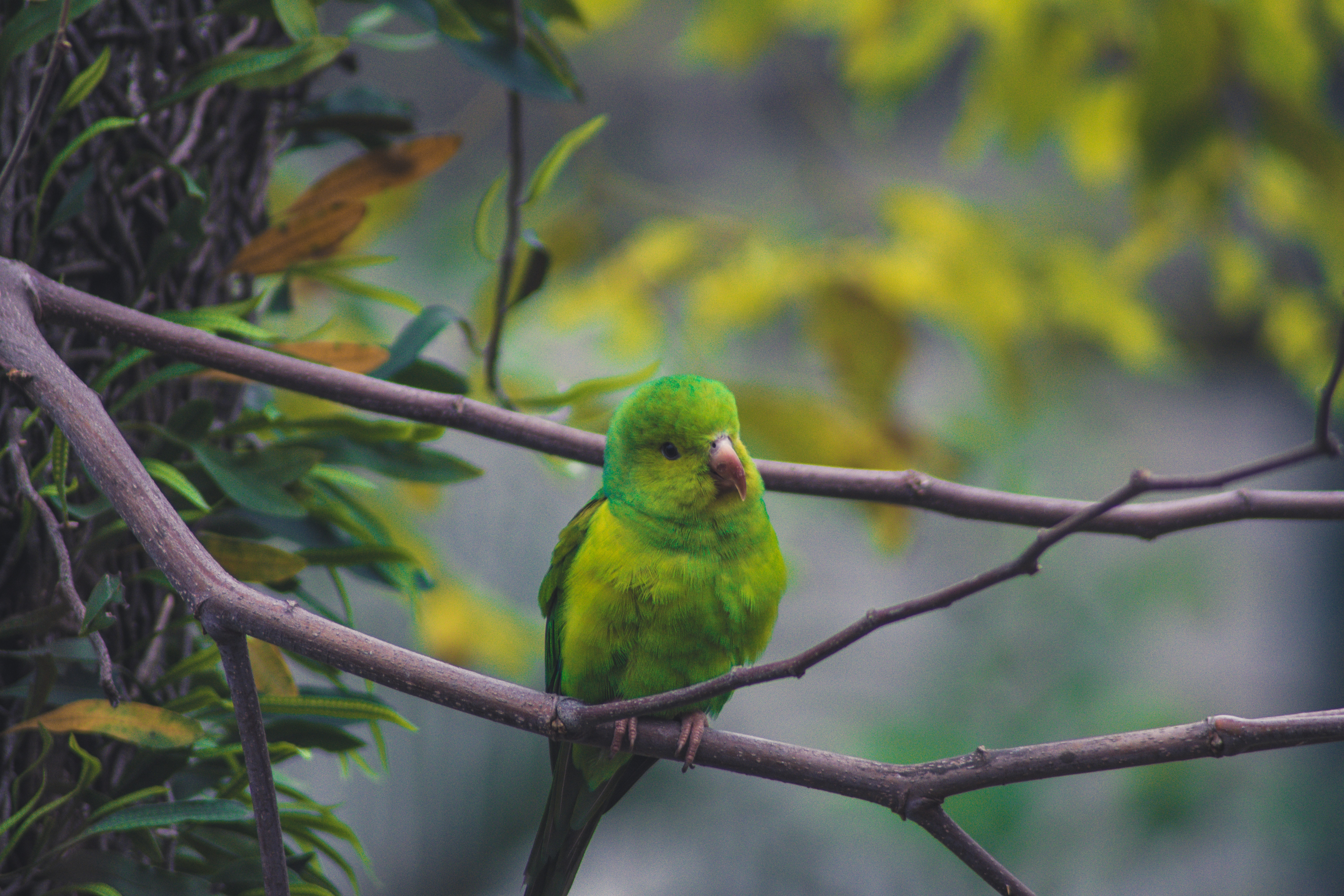 113713 Screensavers and Wallpapers Parrots for phone. Download Parrots, Animals, Bird, Branch pictures for free