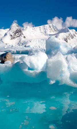 111106壁紙のダウンロード動物, 海洋, 大洋, オットセイ, 雲, 水, 流氷, 氷-スクリーンセーバーと写真を無料で
