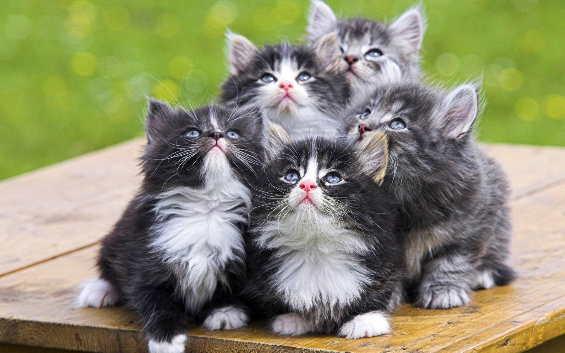 23987 скачать обои Животные, Кошки (Коты, Котики) - заставки и картинки бесплатно