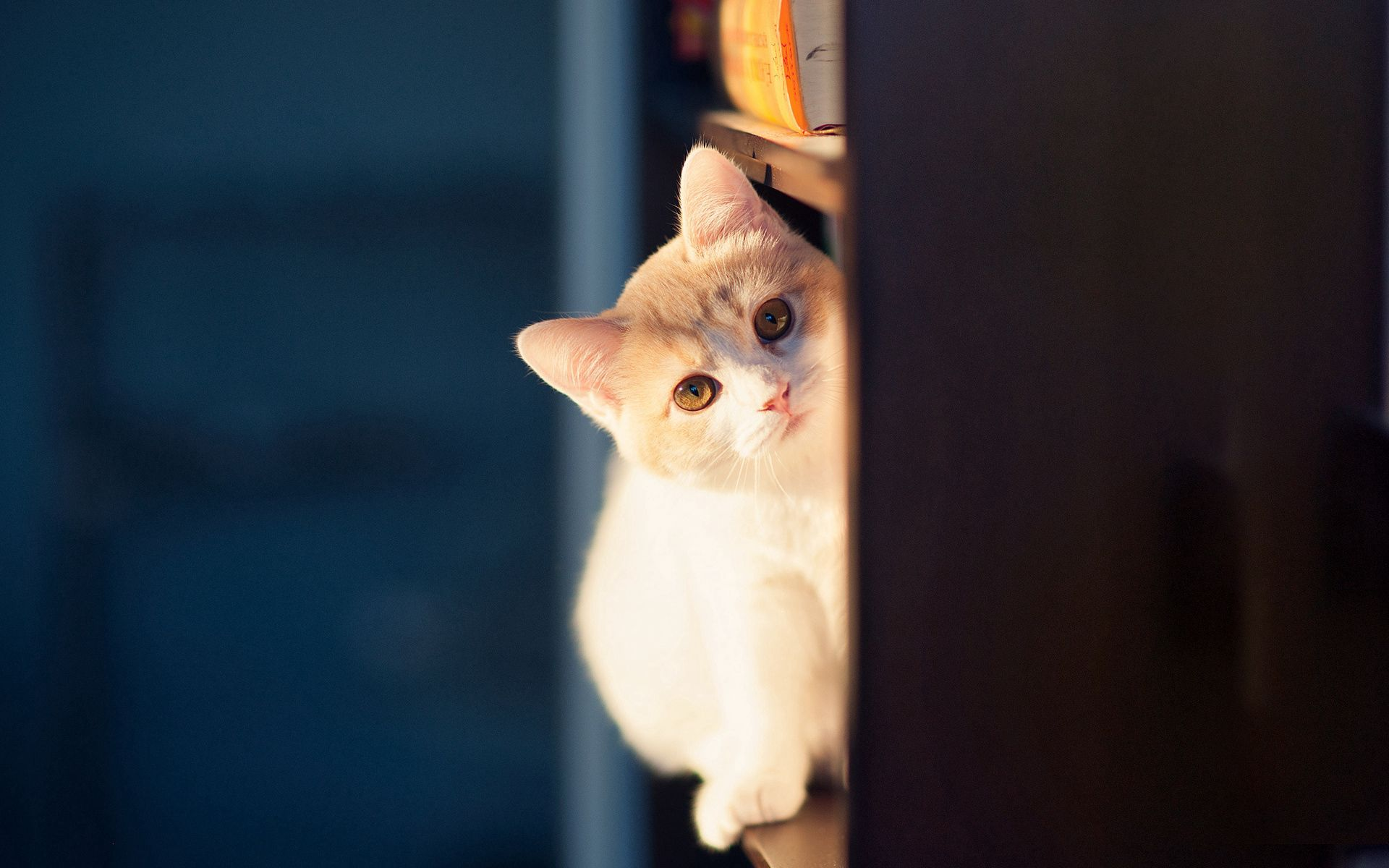 114919 download wallpaper Animals, Cat, Peek Out, Look Out, Wall, Playful screensavers and pictures for free