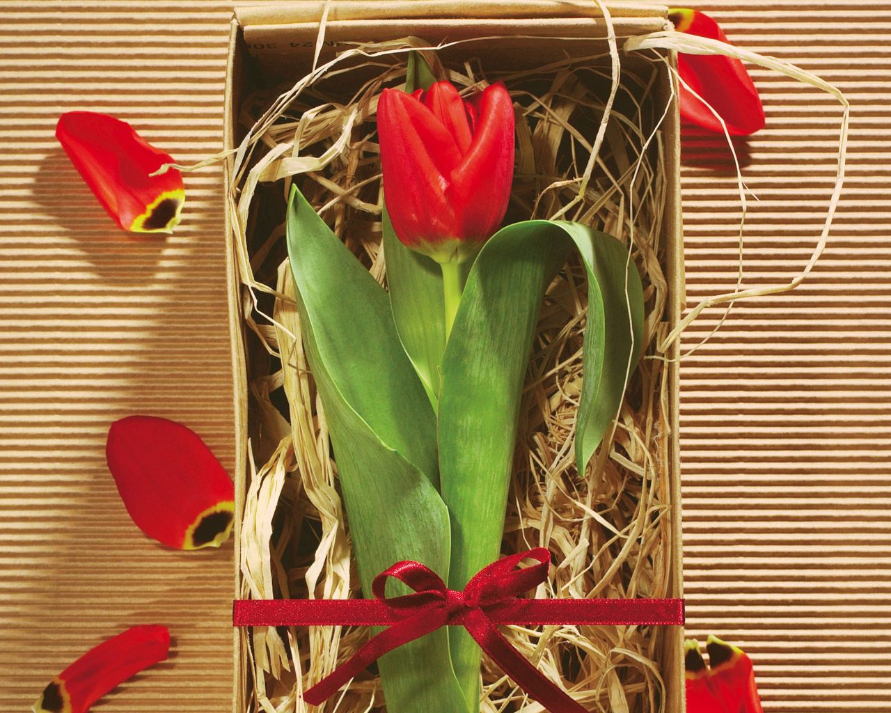 121438 download wallpaper Flowers, Tulip, Flower, Box, Capsule, Present, Gift, Bow, Petals screensavers and pictures for free