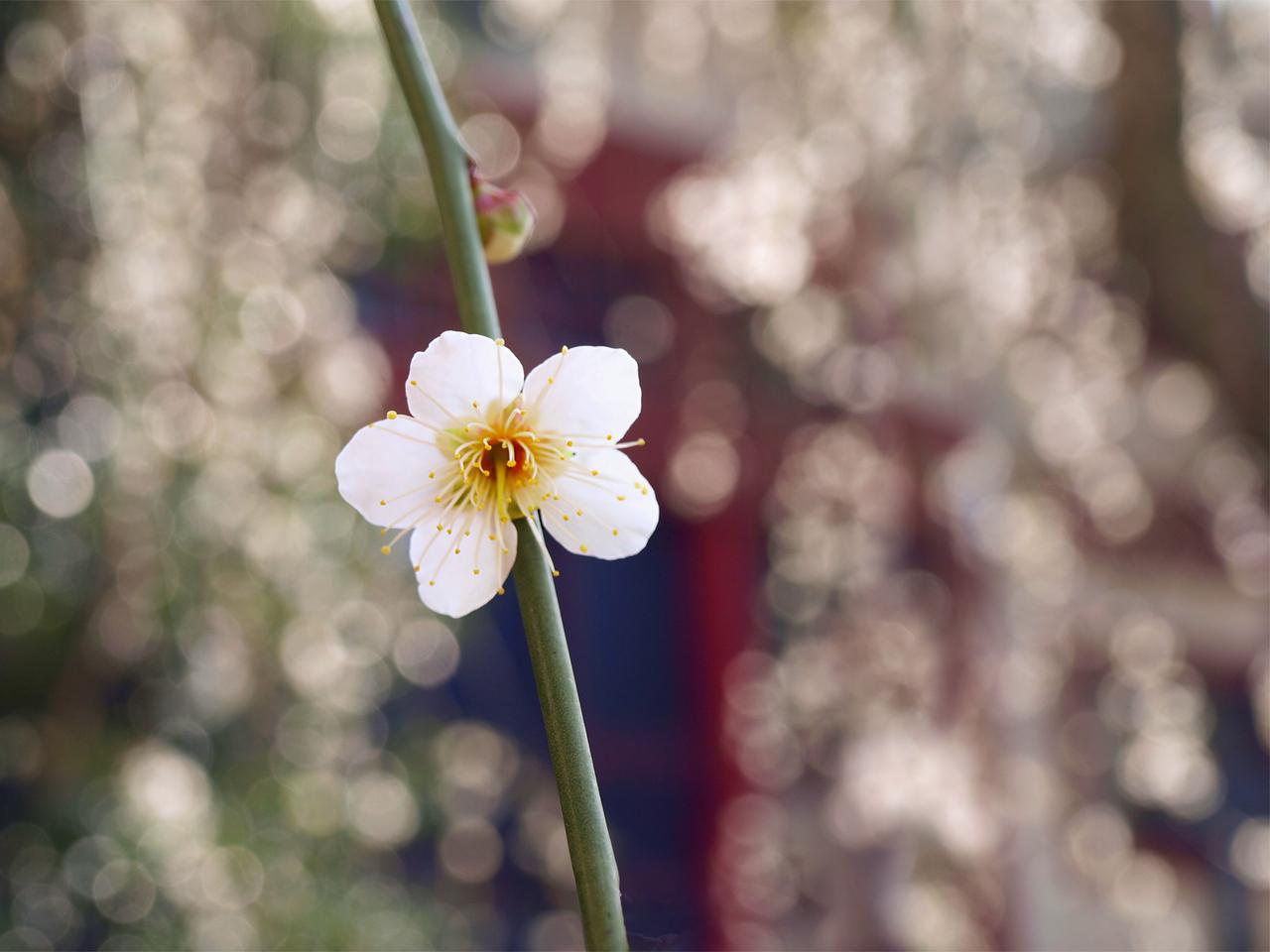 14726 descargar fondo de pantalla Plantas, Flores: protectores de pantalla e imágenes gratis
