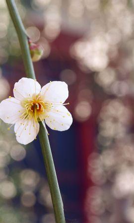 14726 скачать обои Растения, Цветы - заставки и картинки бесплатно
