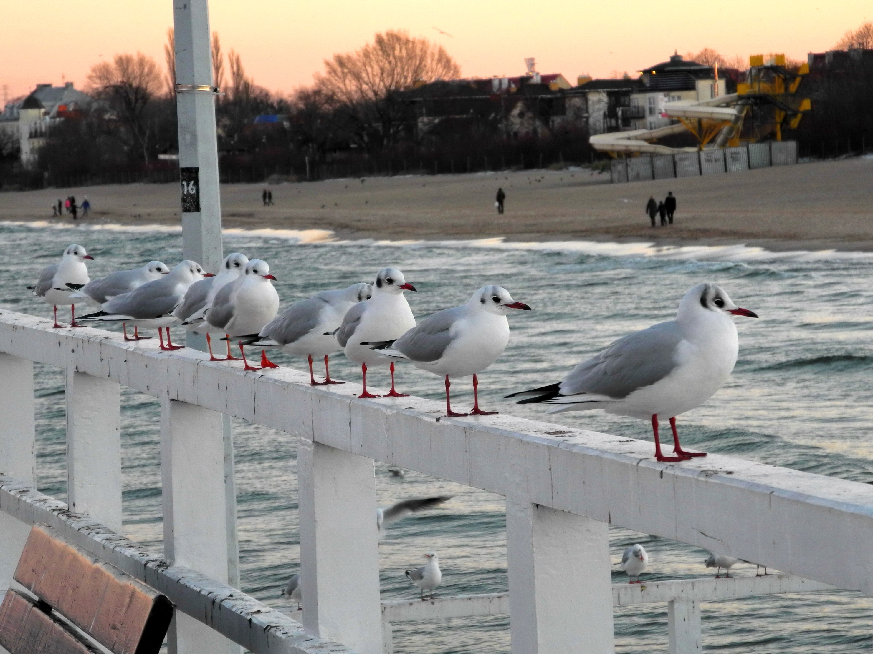 151937 download wallpaper Animals, Seagulls, Bridge, Handrail screensavers and pictures for free