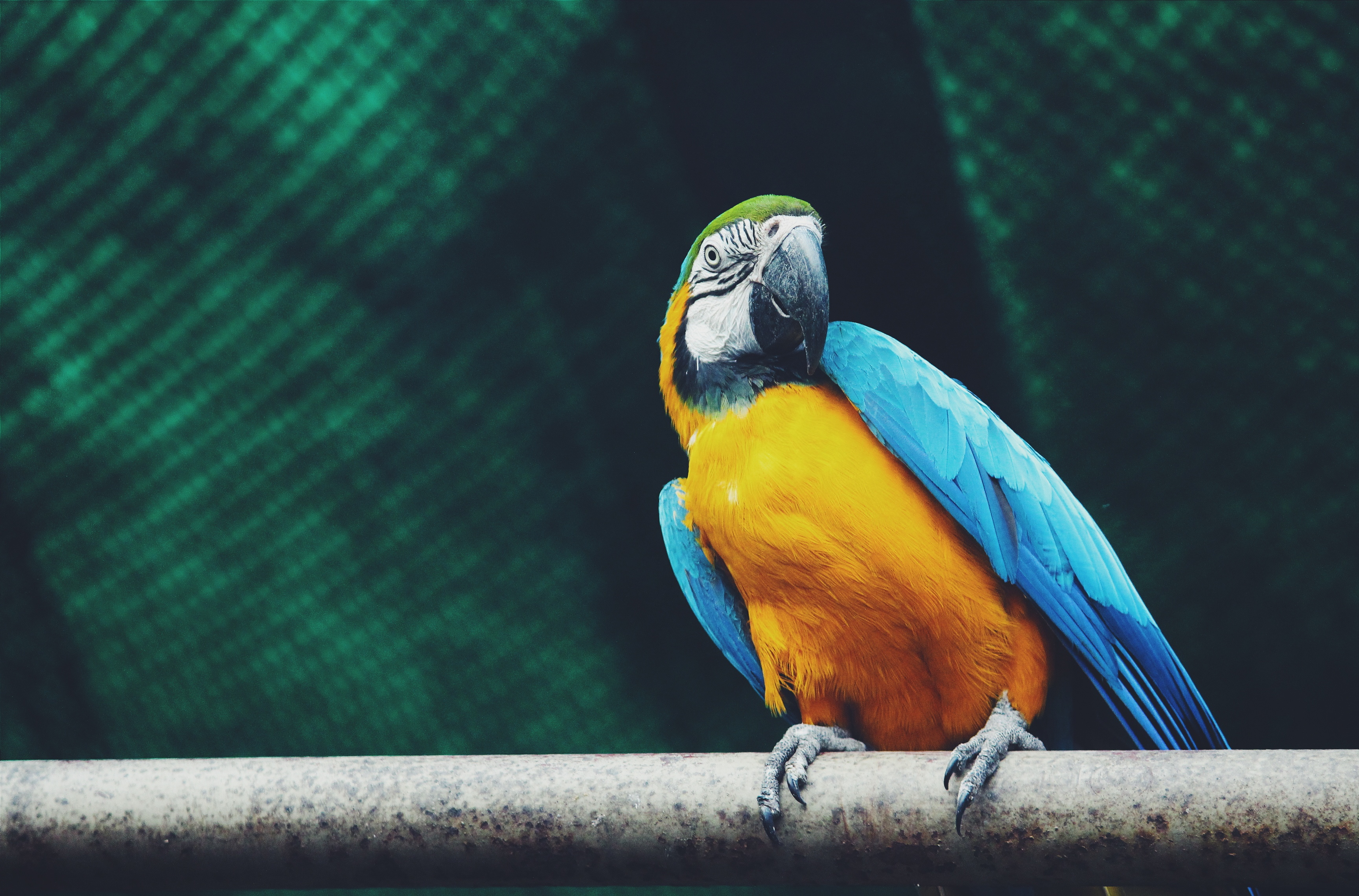 153861 Screensavers and Wallpapers Parrots for phone. Download Animals, Parrots, Bird, Is Sitting, Sits, Macaw pictures for free