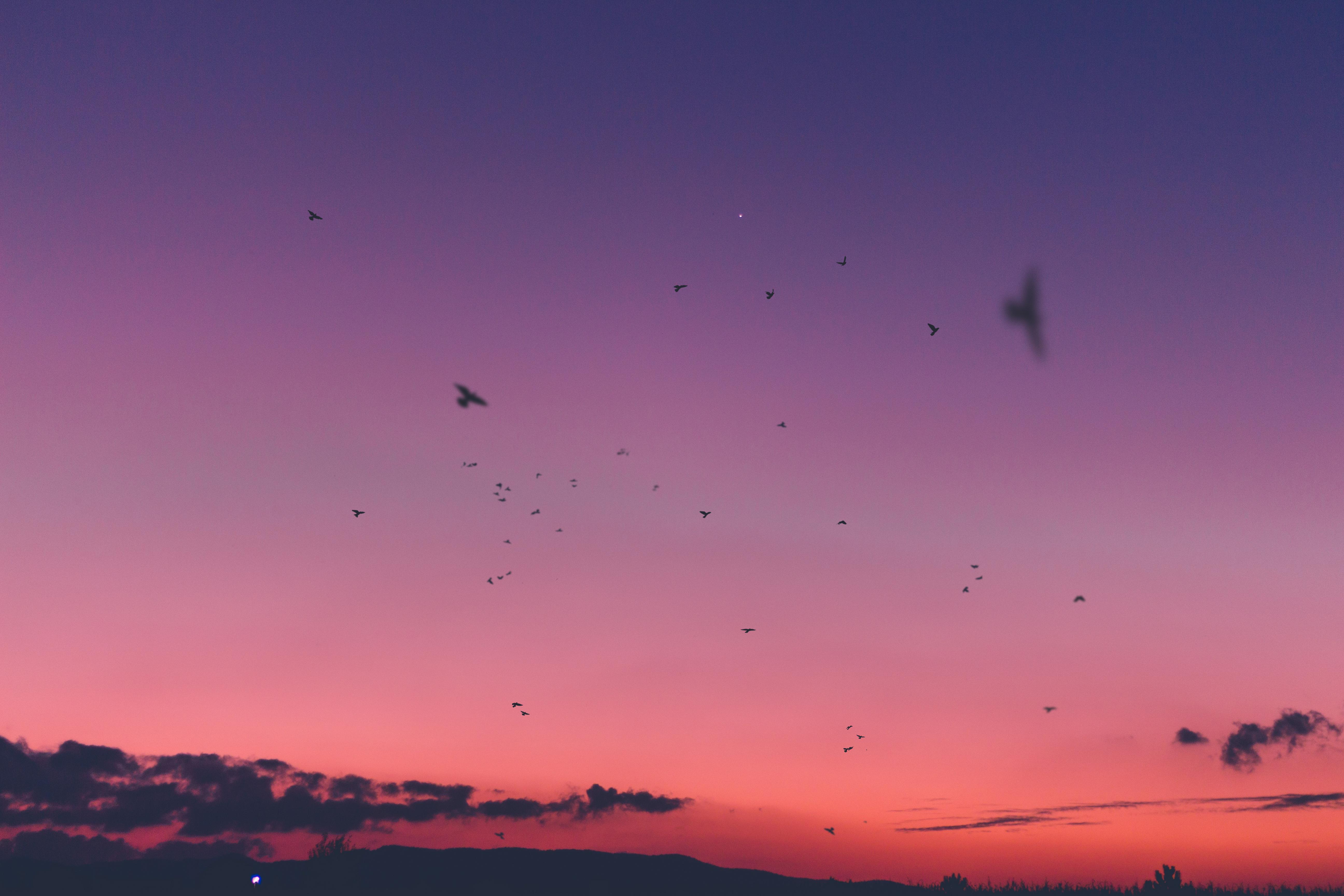 85383 Hintergrundbild 720x1280 kostenlos auf deinem Handy, lade Bilder Natur, Vögel, Sunset, Sky 720x1280 auf dein Handy herunter