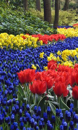 2887 descargar fondo de pantalla Plantas, Paisaje, Flores, Tulipanes: protectores de pantalla e imágenes gratis