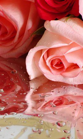 19621 скачать обои Растения, Цветы, Розы, Букеты, Капли - заставки и картинки бесплатно