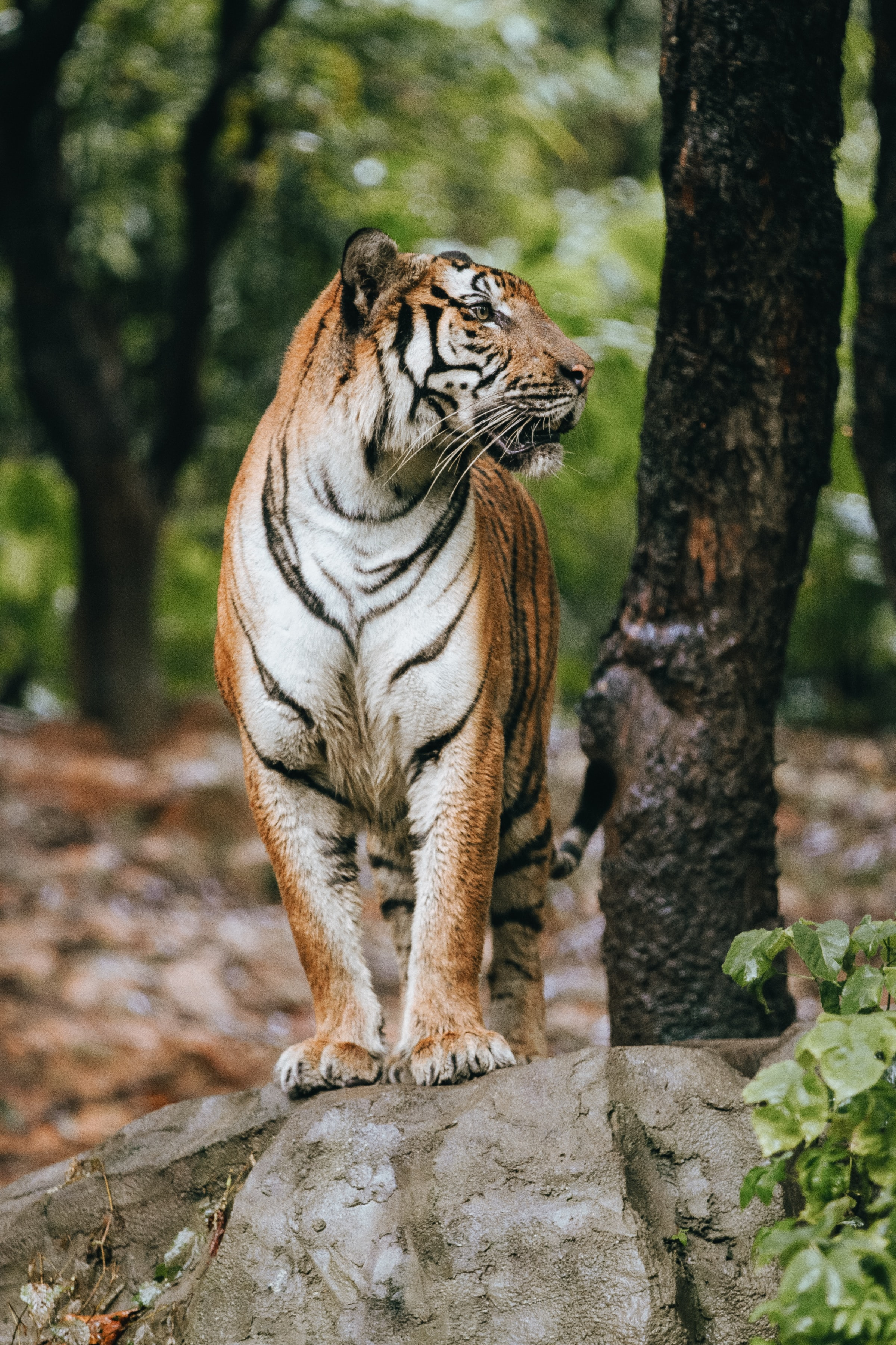 74578 download wallpaper Animals, Tiger, Profile, Predator, Big Cat screensavers and pictures for free