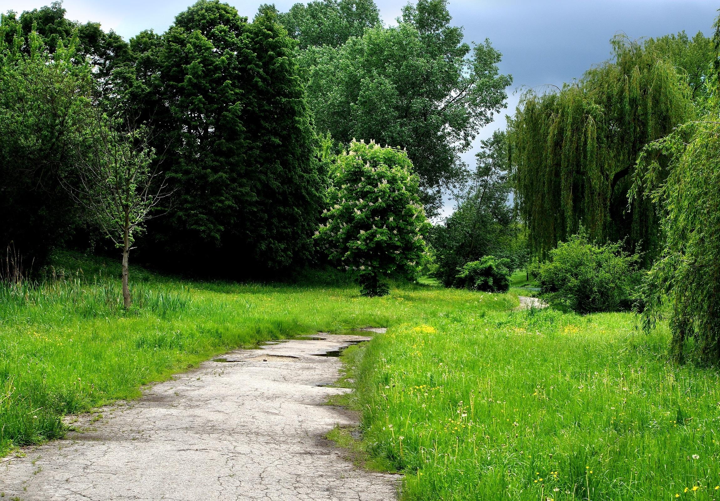 130899 Заставки и Обои Деревья на телефон. Скачать Деревья, Природа, Трава, Лес, Тропа картинки бесплатно