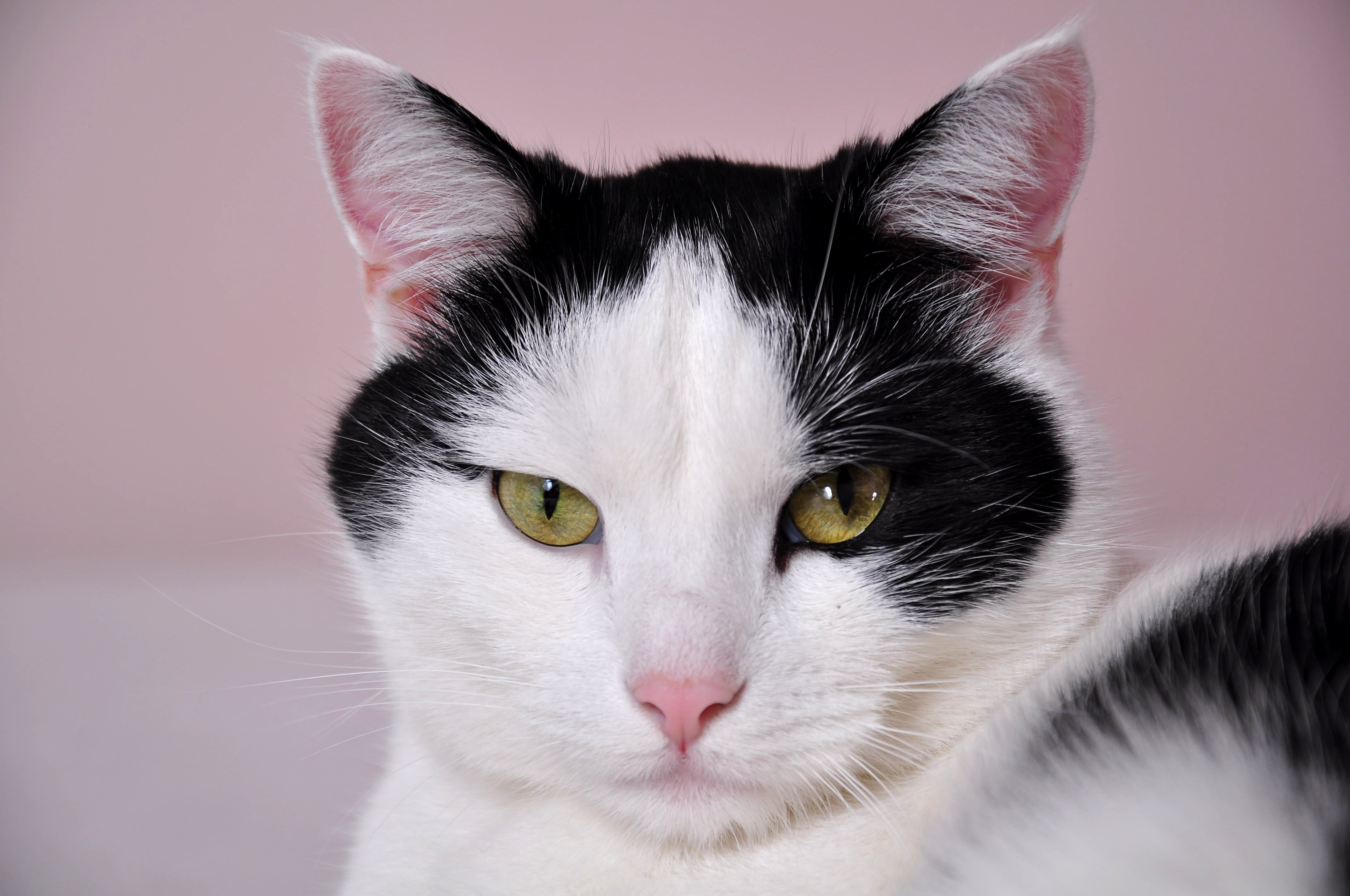119810 download wallpaper Animals, Cat, Muzzle, Spotted, Spotty screensavers and pictures for free