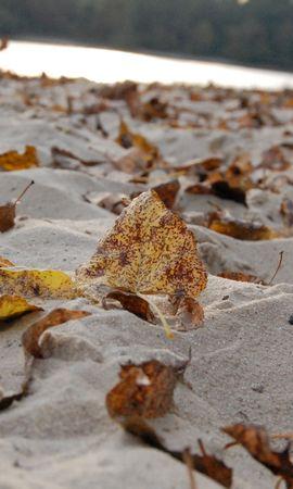 9207 скачать обои Фон, Осень, Листья, Пляж, Песок - заставки и картинки бесплатно