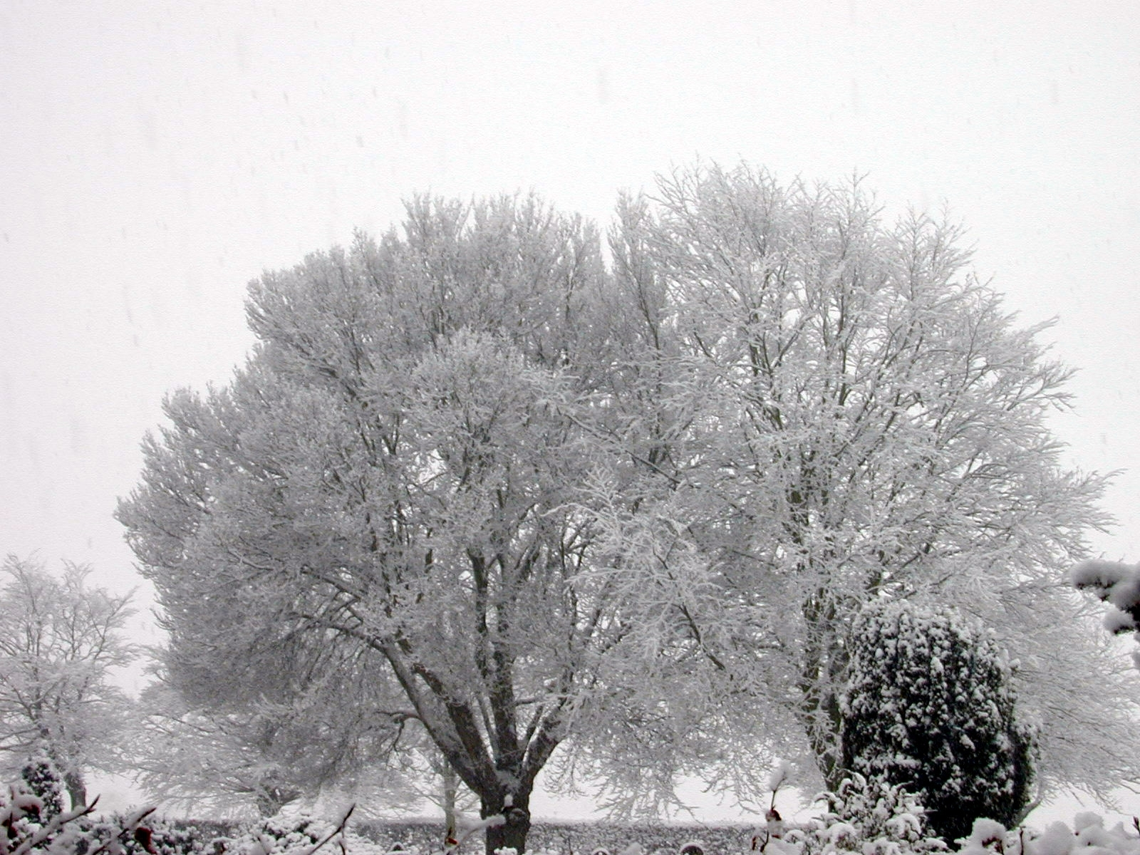 1500 download wallpaper Landscape, Winter, Trees, Snow screensavers and pictures for free