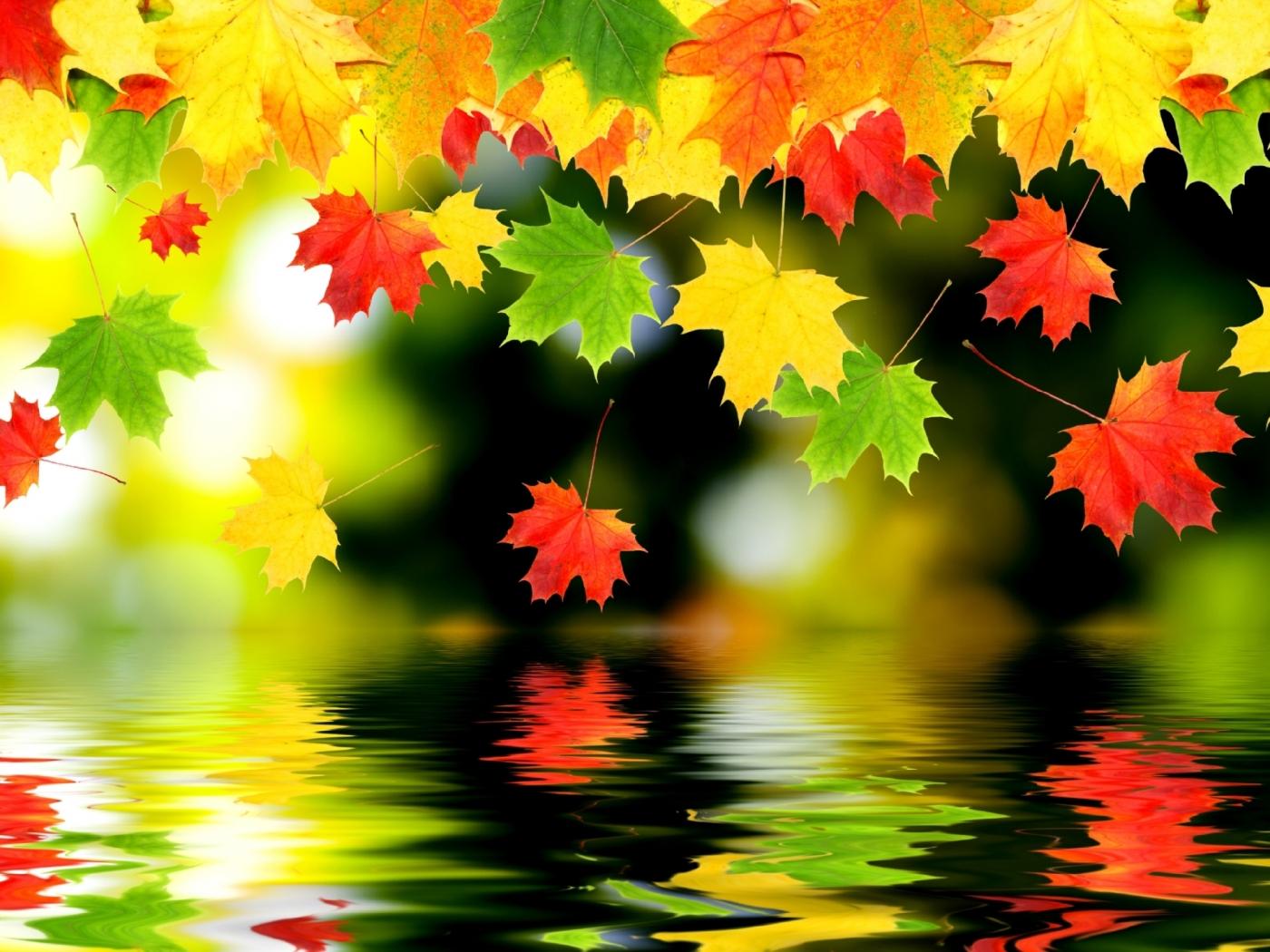 33652 скачать обои Осень, Фон, Листья - заставки и картинки бесплатно