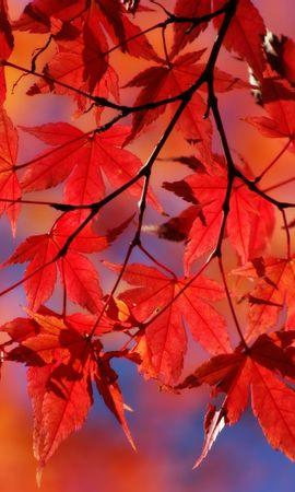 876 скачать обои Растения, Осень, Листья - заставки и картинки бесплатно