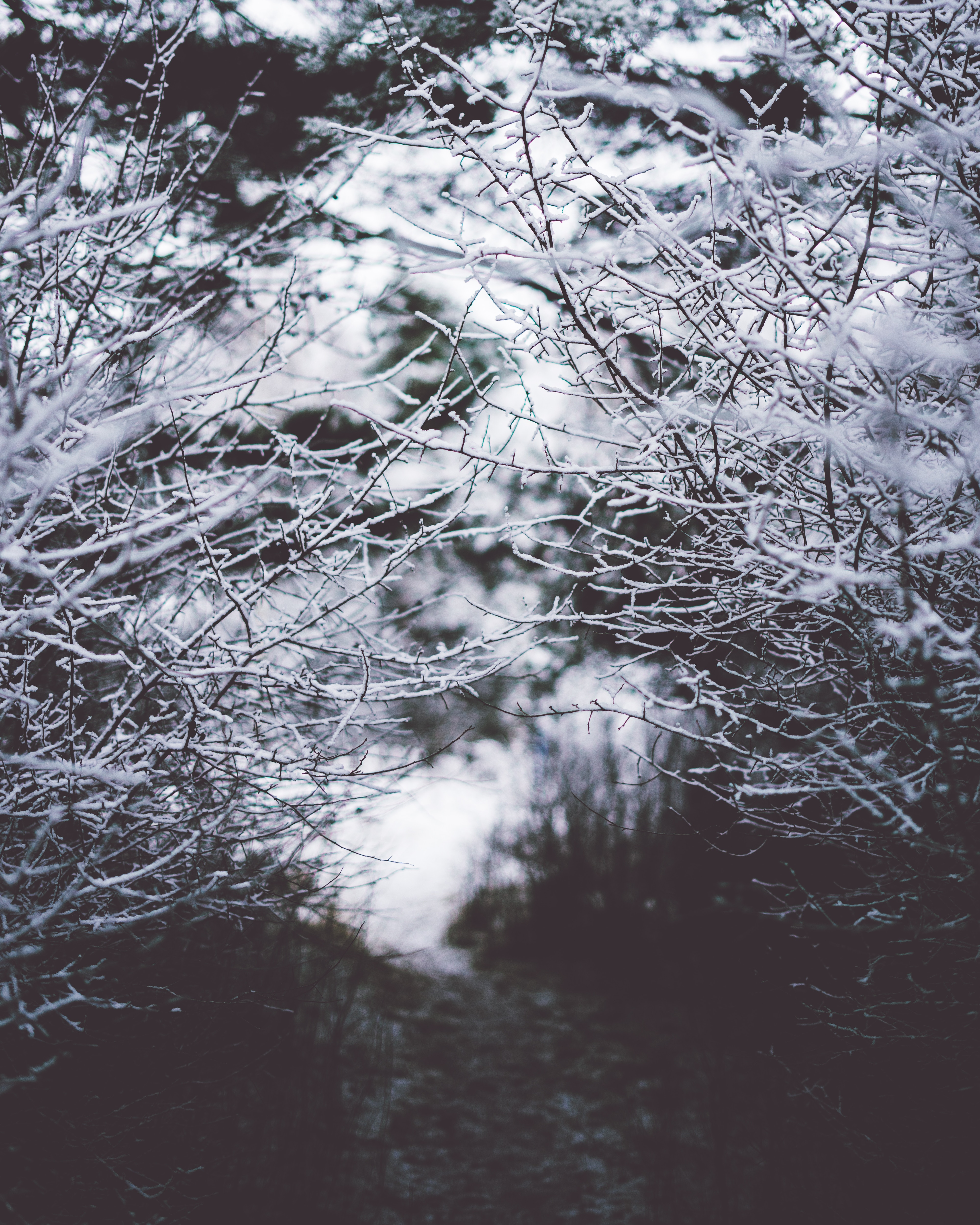 150066 download wallpaper Nature, Branches, Frost, Hoarfrost, Snow, Fog, Blur, Smooth screensavers and pictures for free