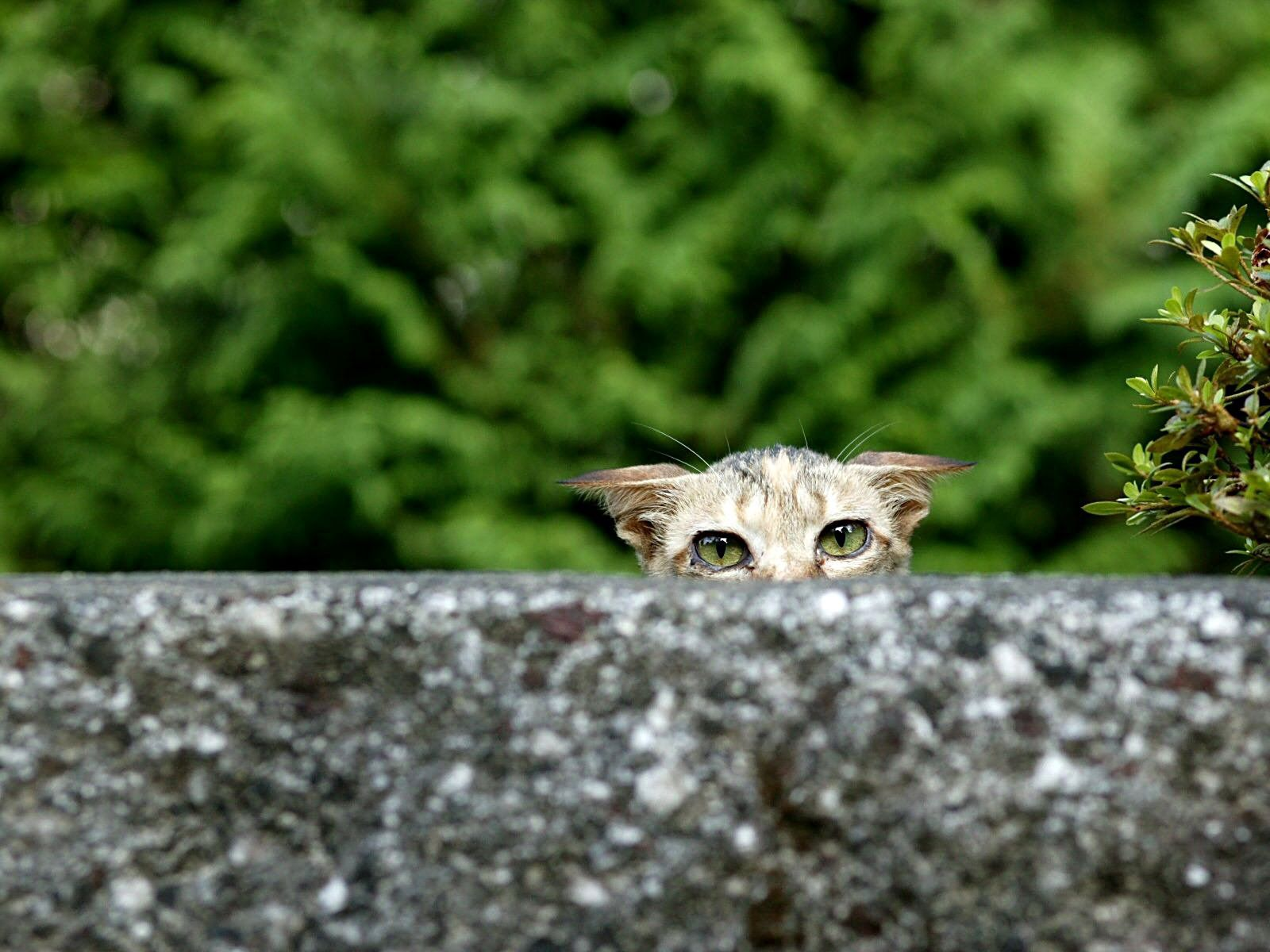 65940 download wallpaper Animals, Cat, Sick, Peek Out, Look Out, Eyes screensavers and pictures for free