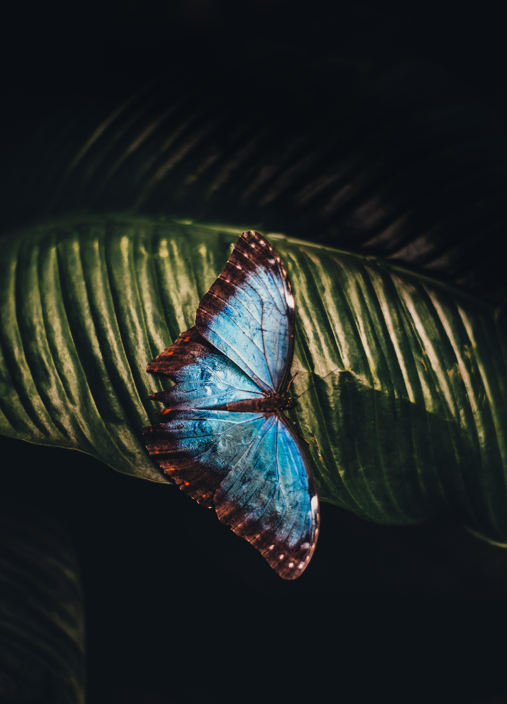 手機的108050屏保和壁紙昆虫。 免費下載 宏, 蝴蝶, 昆虫, 床单, 工作表 圖片