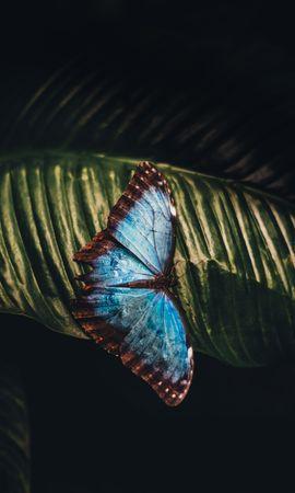 お使いの携帯電話の108050スクリーンセーバーと壁紙昆虫。 大きい, マクロ, バタフライ, 蝶, 昆虫, シート, 葉の写真を無料でダウンロード