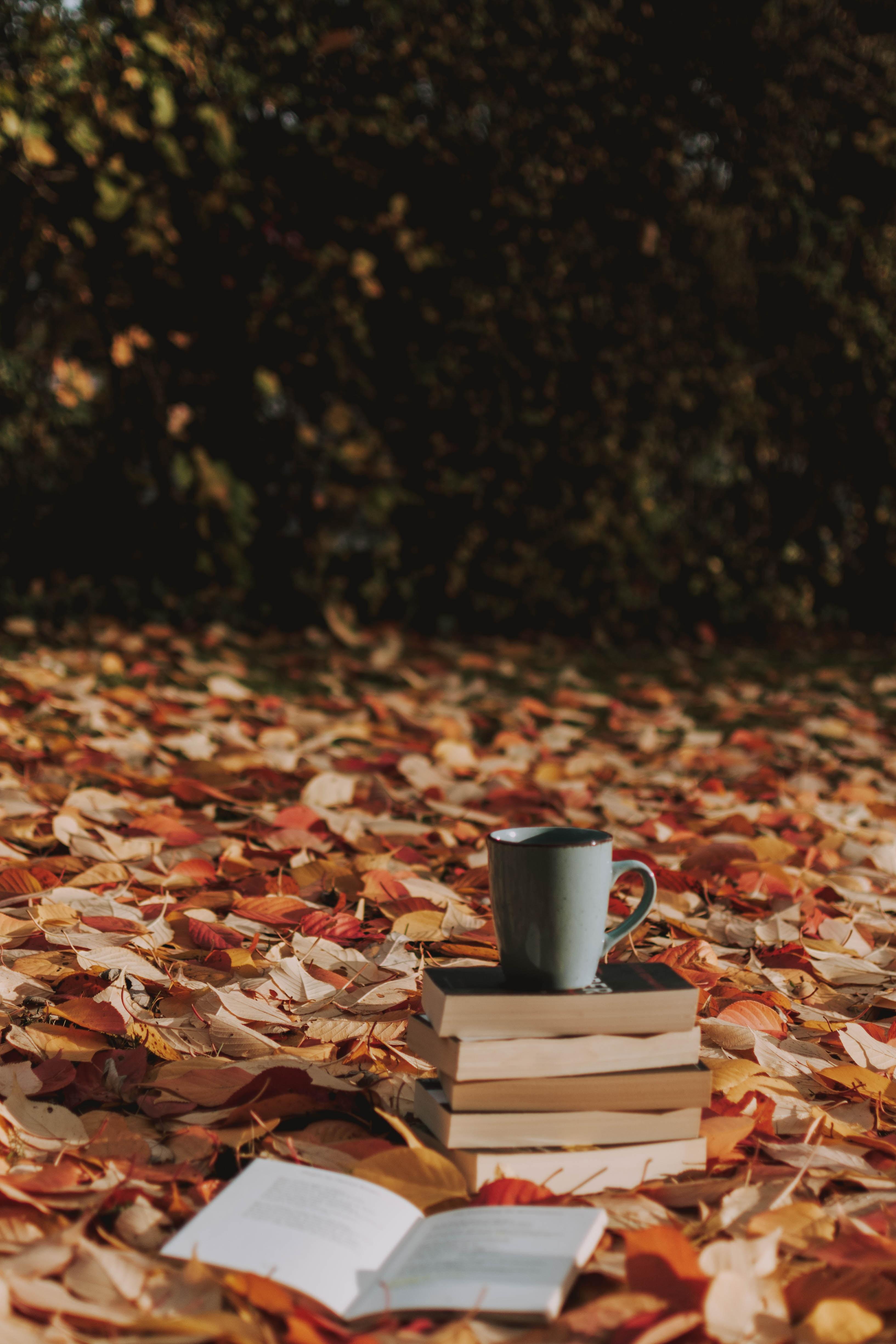 105431 Hintergrundbild herunterladen Herbst, Bücher, Verschiedenes, Sonstige, Tasse, Laub, Becher - Bildschirmschoner und Bilder kostenlos
