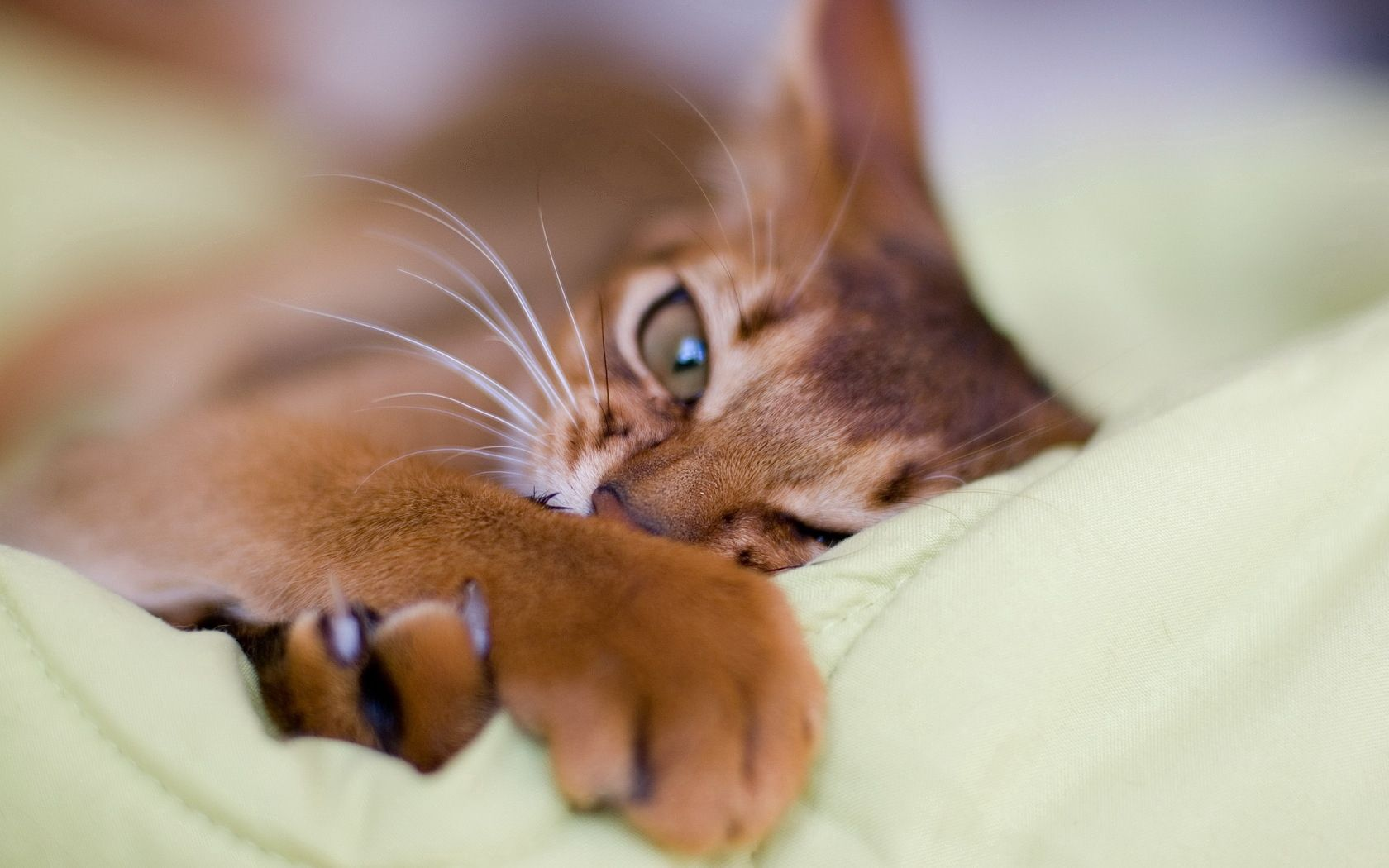 74208 download wallpaper Animals, Cat, Claws, Paw, Muzzle screensavers and pictures for free