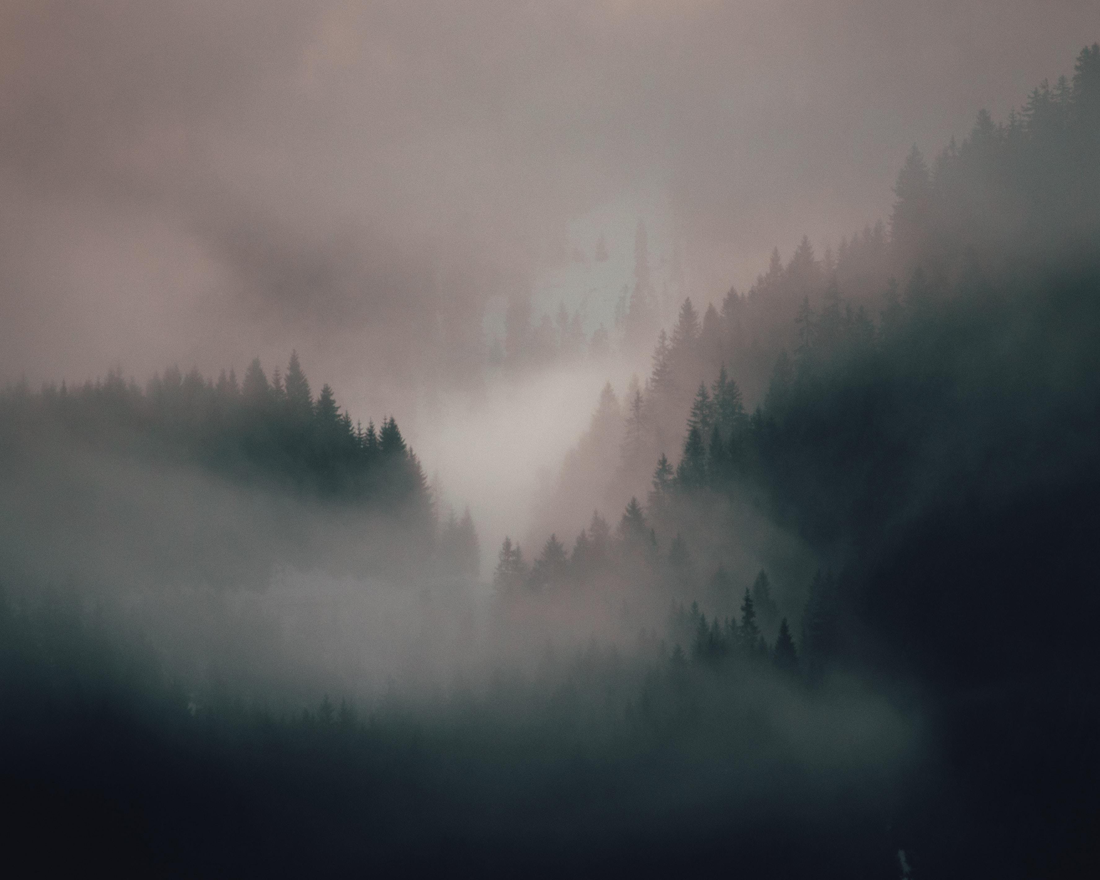 65223 Hintergrundbild 480x800 kostenlos auf deinem Handy, lade Bilder Natur, Bäume, Wald, Nebel, Die Hügel, Hügel 480x800 auf dein Handy herunter