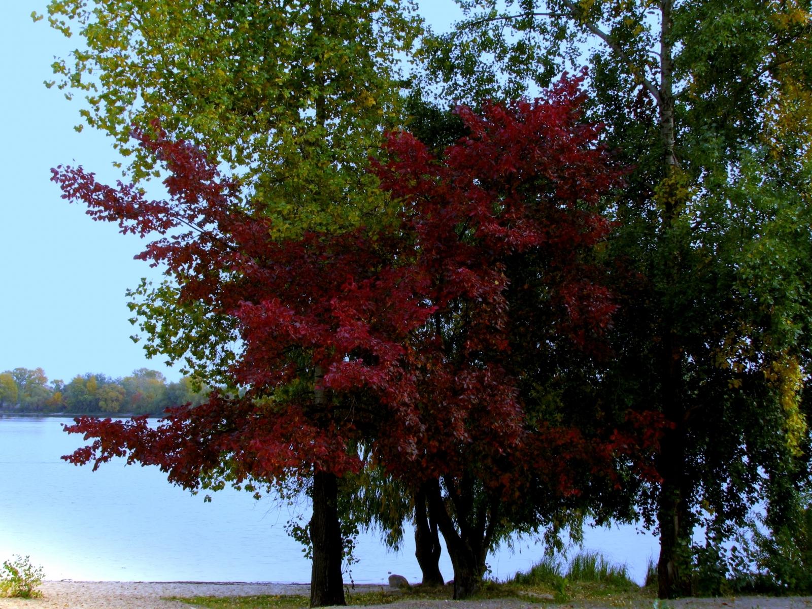 413 descargar fondo de pantalla Plantas, Agua, Árboles: protectores de pantalla e imágenes gratis