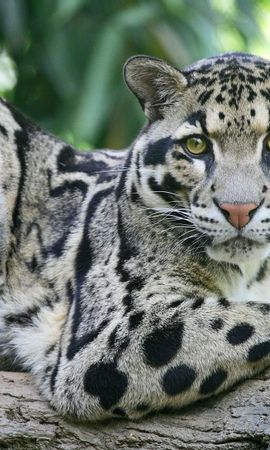 4738 download wallpaper Animals screensavers and pictures for free