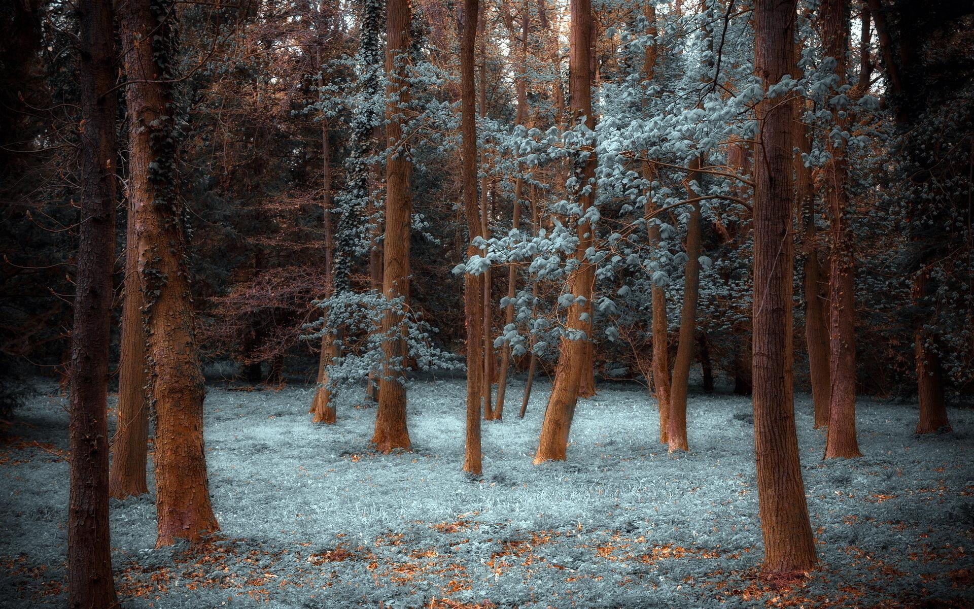 Скачать картинку Трава, Деревья, Пейзаж в телефон бесплатно.