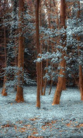 21892 скачать обои Пейзаж, Деревья, Трава - заставки и картинки бесплатно