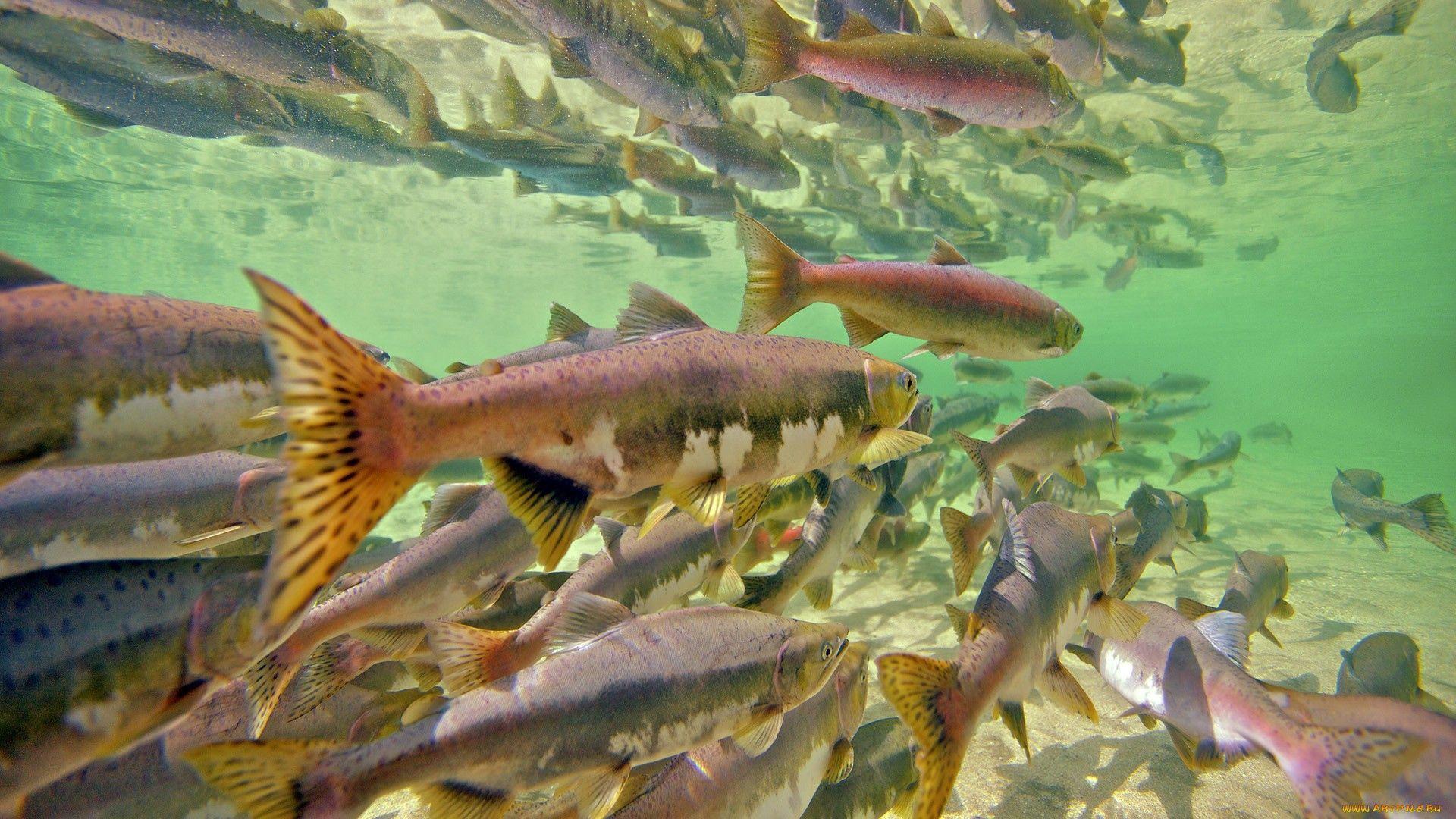 91913 Заставки и Обои Рыбы на телефон. Скачать Рыбы, Животные, Море, Подводный Мир, Много картинки бесплатно