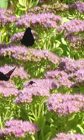 5592 скачать обои Растения, Бабочки, Цветы, Фон - заставки и картинки бесплатно