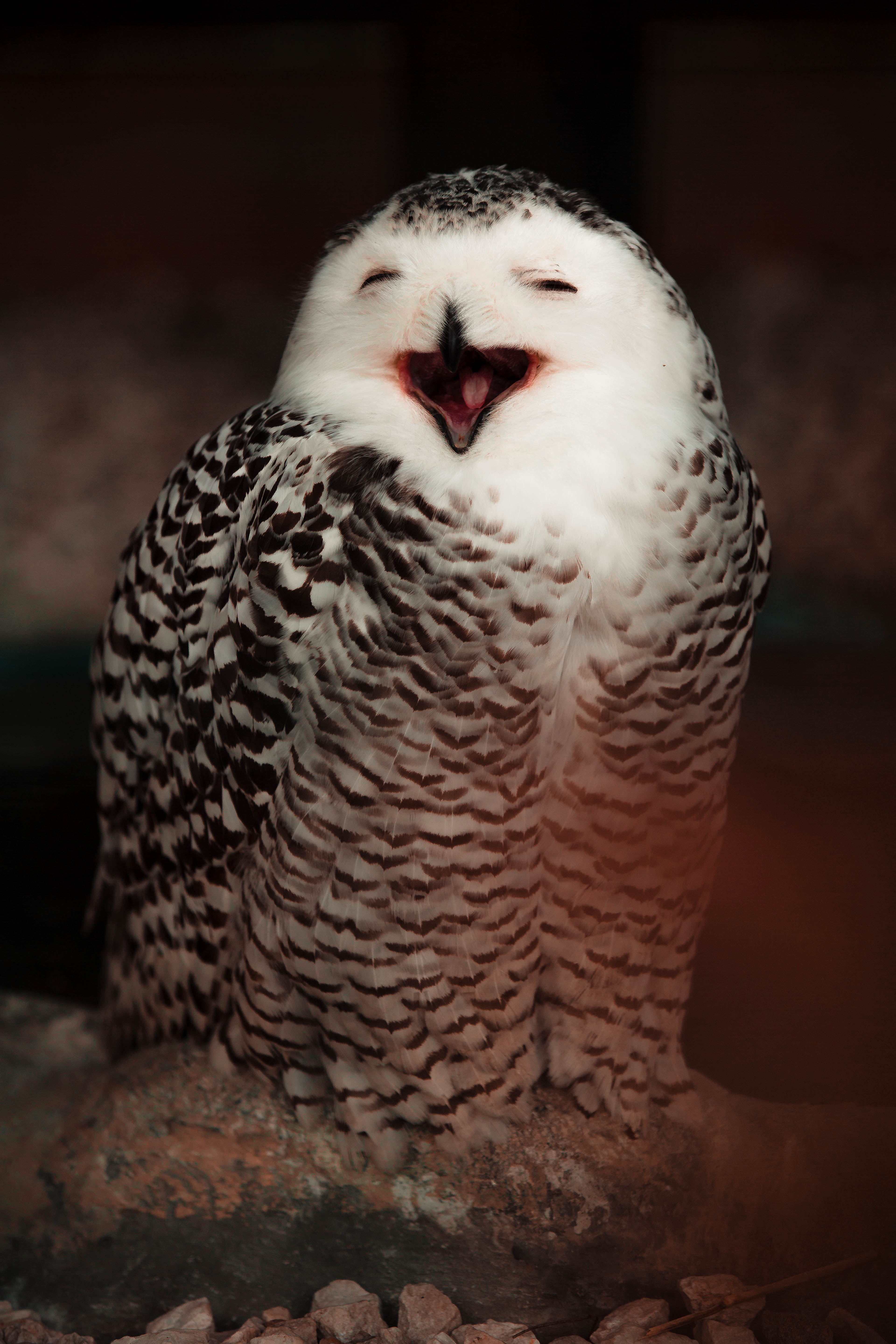 59687 download wallpaper Animals, Owl, Bird, Cool, Emotions, White Owl, Polar Owl screensavers and pictures for free