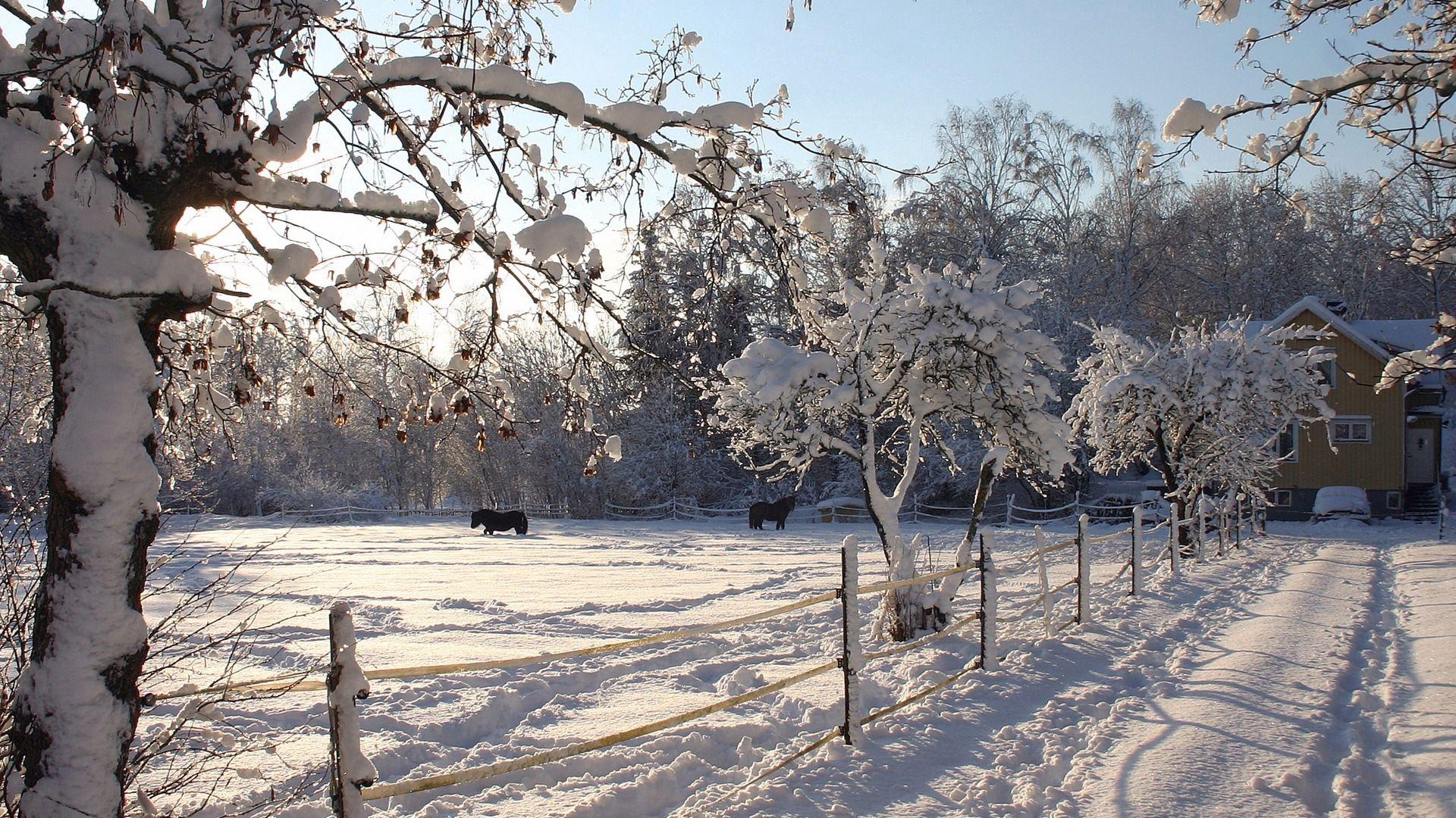 101684 скачать обои Природа, Лошади, Загон, Снег, Зима - заставки и картинки бесплатно