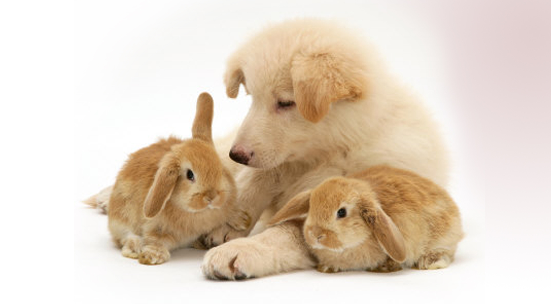 17040 download wallpaper Animals, Dogs, Rabbits screensavers and pictures for free