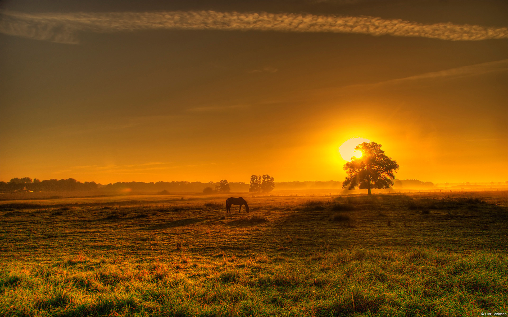 27314 download wallpaper Horses, Landscape, Trees, Sunset, Fields screensavers and pictures for free
