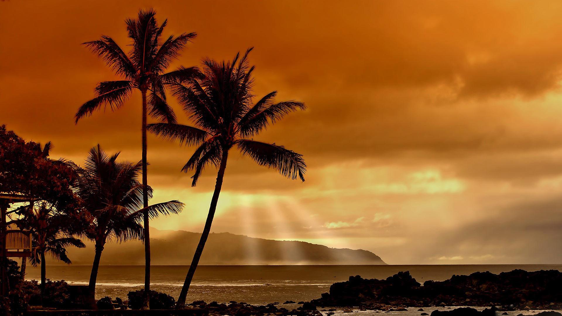 25899 скачать обои Пейзаж, Закат, Море, Облака, Пальмы - заставки и картинки бесплатно