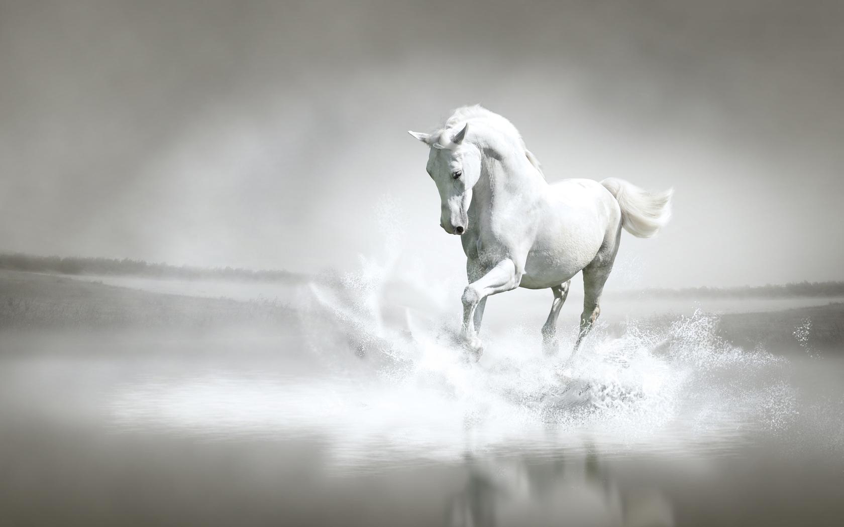 31186 скачать обои Животные, Лошади - заставки и картинки бесплатно