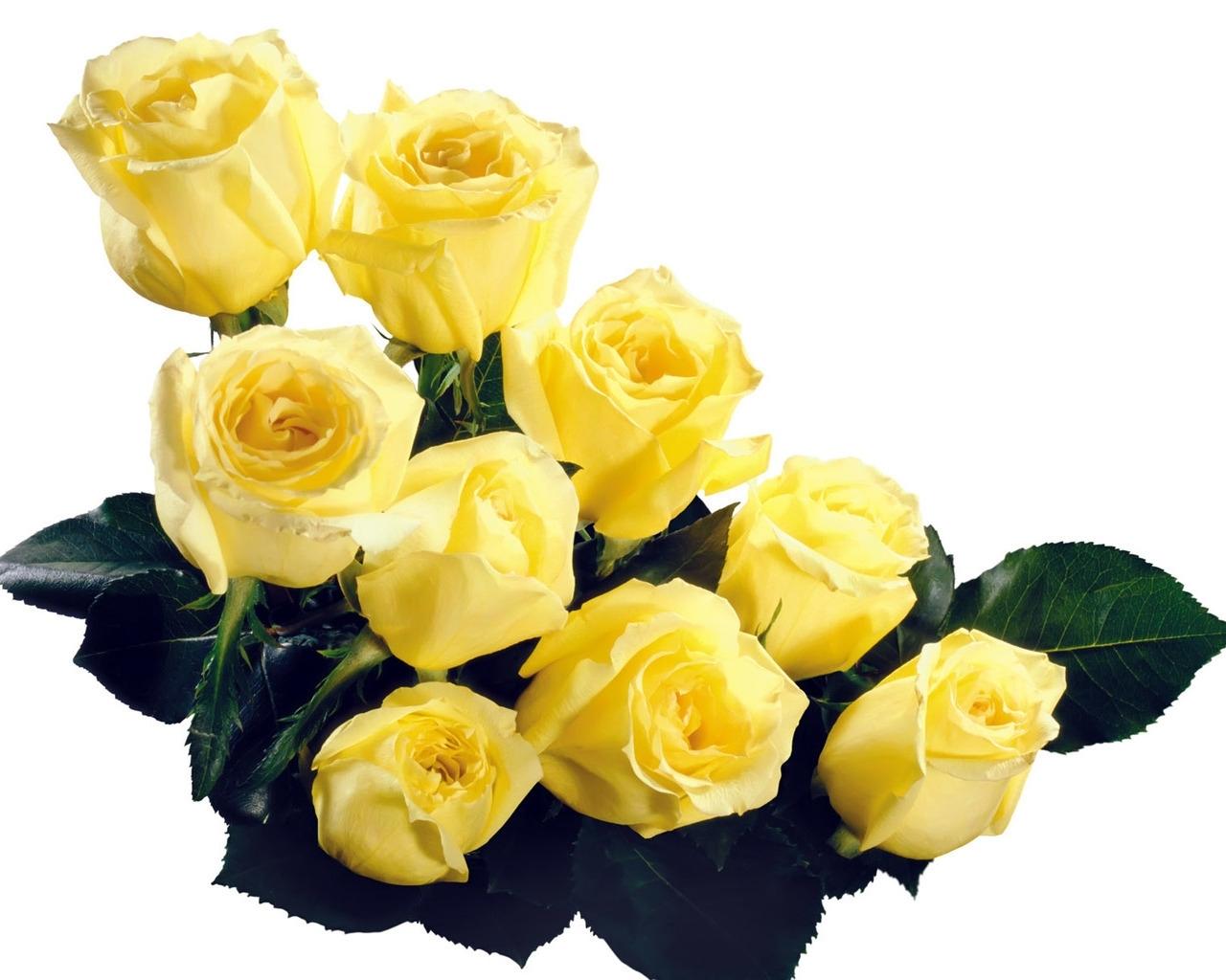 9433 скачать Желтые обои на телефон бесплатно, Открытки, Растения, Праздники, Цветы, Розы, 8 Марта Желтые картинки и заставки на мобильный