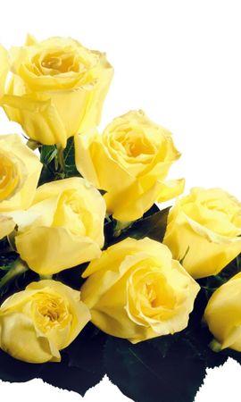 9433 baixar papel de parede Férias, Plantas, Flores, Rosas, Cartões Postais, 8 De Março, Dia Internacional Da Mulher - protetores de tela e imagens gratuitamente