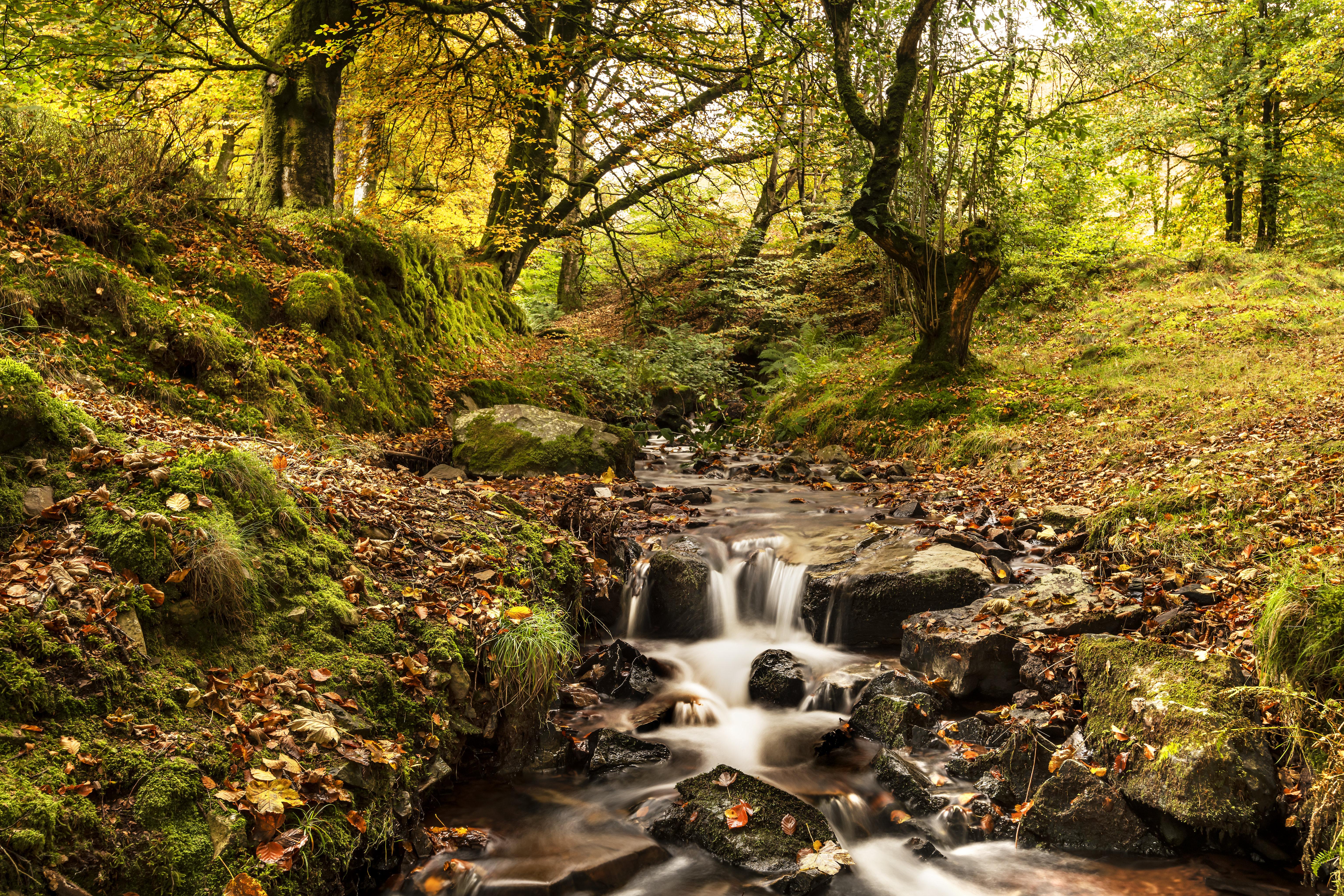 147694 скачать обои Ручей, Река, Деревья, Осень, Природа - заставки и картинки бесплатно