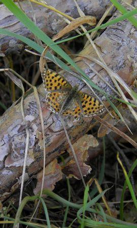 33973 Salvapantallas y fondos de pantalla Insectos en tu teléfono. Descarga imágenes de Mariposas, Insectos gratis