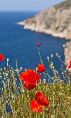 151477 скачать обои Цветы, Маки, Склон, Море, Горы - заставки и картинки бесплатно