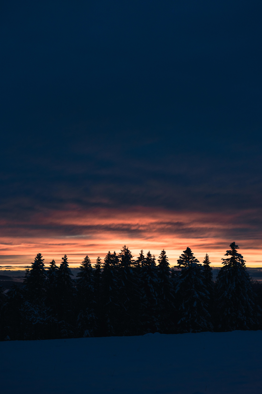 58633 скачать обои Природа, Деревья, Закат, Снег, Сумерки, Зима, Елки - заставки и картинки бесплатно