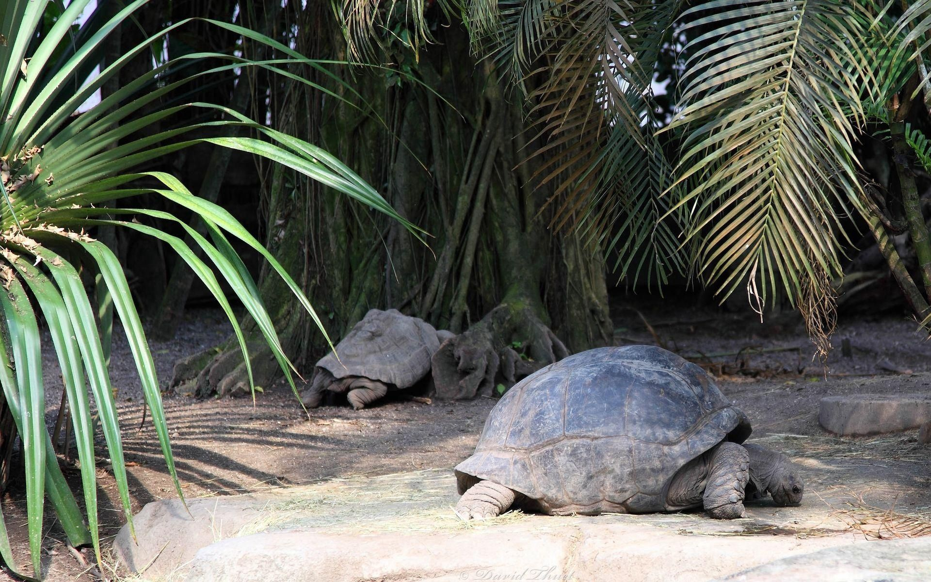 112578 download wallpaper Animals, Turtles, Grass, Wood, To Lie Down, Lie, Tree, Carapace, Shell screensavers and pictures for free