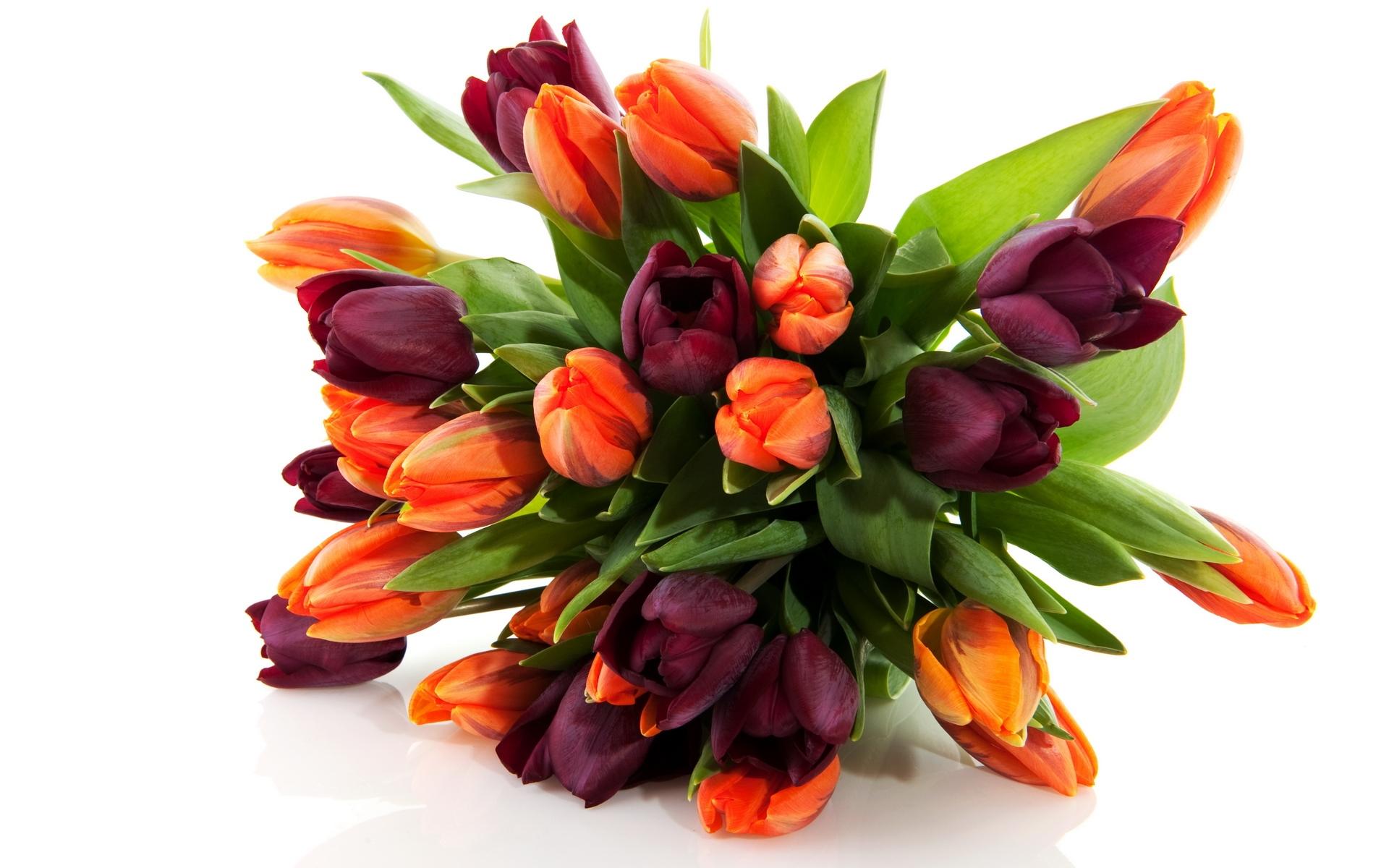 36557 скачать обои Растения, Цветы, Тюльпаны - заставки и картинки бесплатно