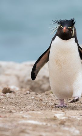 106920 download wallpaper Animals, Penguin, Animal, Funny screensavers and pictures for free